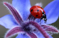Pendant les Vacances de Pâques, voyagez au pays des insectes !