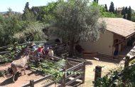 L'Ecoferme de la Barre, de la biodiversité en plein cœur de Toulon.