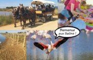 Fête de la nature aux Vieux Salins d'Hyères 2018