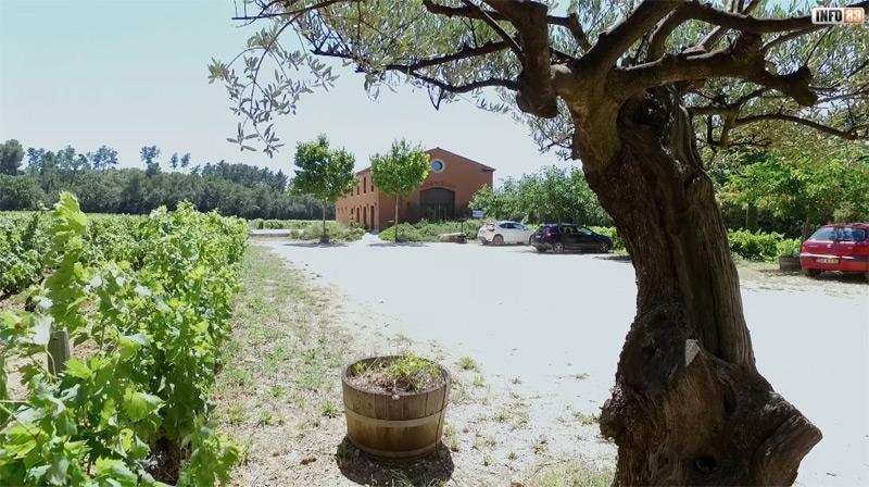 Deux vins de Provence à découvrir ! Domaine Peirecèdes et Château La Tulipe Noire
