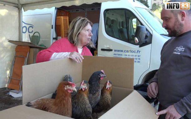 Le SITTOMAT offre un poulailler pour l'achat de deux poules