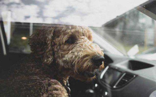 Coups de chaleur animaux domestiques, les bons conseils du vétérinaire
